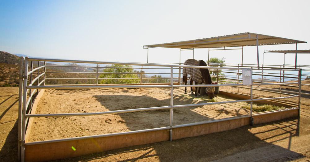 Poway Equestrian Center Horse Pens